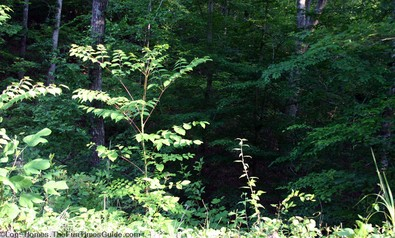 forested-piece-of-property.jpg