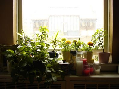 live-plants-on-windowsill.jpg