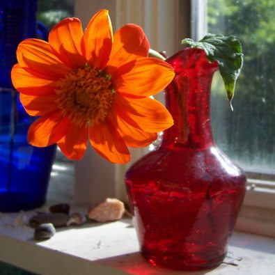 orange-flower-red-vase-windowsill-by-spryngtree.jpg