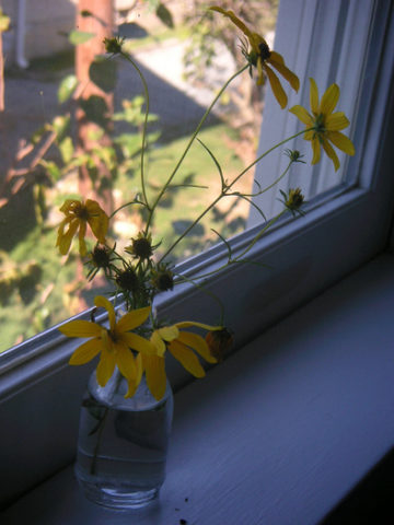simple-flowers-in-vase-on-windowsill-by-snickclunk.jpg