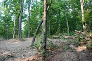 standing-far-right-looking-left-to-start-of-logging-road.jpg