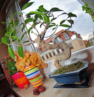 windowsill-bonsai-tree-by-realname.jpg