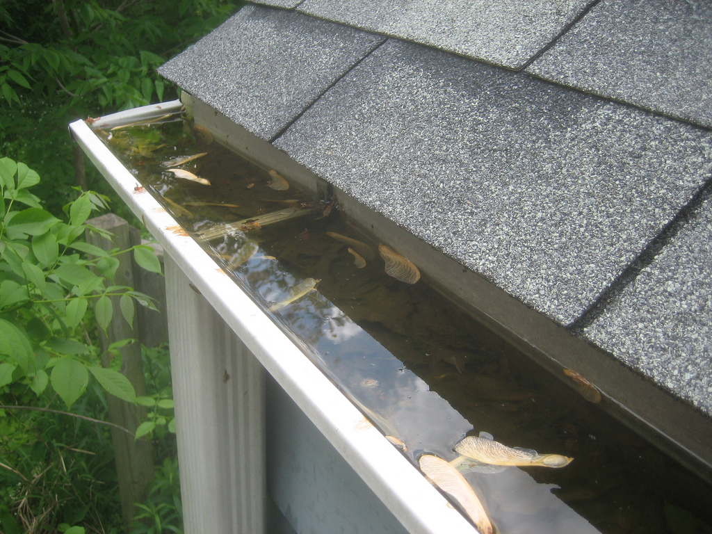 Before you buy gutter guards review these pros cons of clogged gutter by akegg solutioingenieria Choice Image