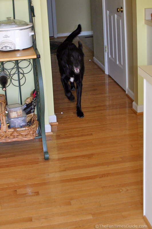 Vinyl Or Laminate Flooring For Dogs Gurus Floor